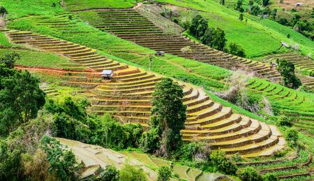 chaingmai: Terraced Paddy Field of Pa Bong Pieng in Mae chaem Village , Chaingmai Province , Thailand.