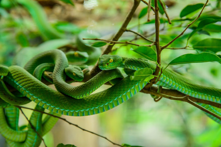 limbless: green snake Stock Photo