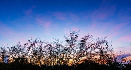 seascapes: Colored sky with grass silhouette along bottom
