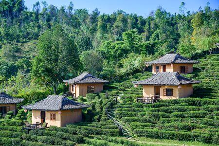 hospedaje: Lodging houses on hill slope in tea plantation at Ban Rak Thai , Mae Hong Son , Thailand. Editorial