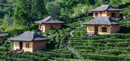 RAK THAI VILLAGE, MAE HONG SON, THAILAND - Dec 11, 2016 : Lodging houses on hill slope in tea plantation at Ban Rak Thai , Mae Hong Son , Thailand.