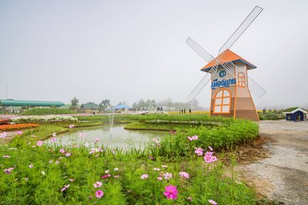 december 21: CHIANG MAI, THAILAND - DECEMBER 21: Cosmos flower field and wind turbine in the garden, Being decorated for tourism in winter, Chiang Mai ,Thailand in December 21, 2016.
