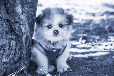 Cute puppy dog looking camera, Selective focus and Monotone color effect