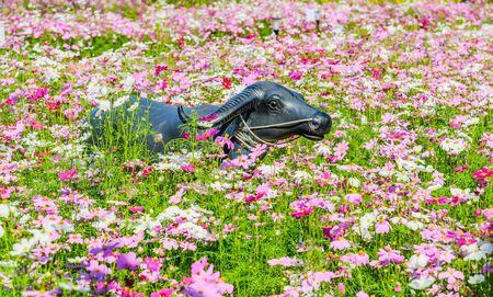 beautiful location: Statue of buffalo in the garden, Buffalo statue in cosmos flower garden