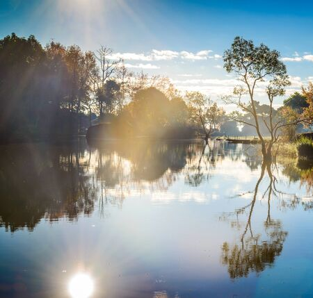 Tree silhouette with Reflection and the mist in morning in lake
