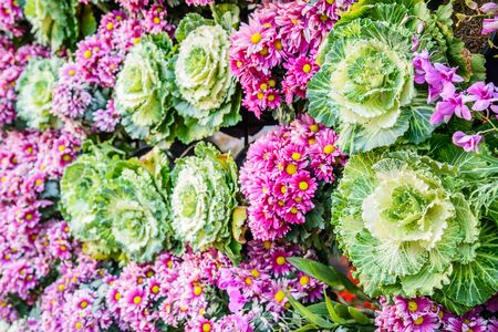 desing: Vertical garden floral and vegetable, Background of colorful flowers and vegetables  that decorated the backdrop for the design of nature, Chiang Mai, Thailand.