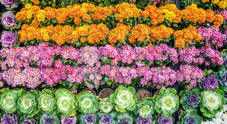 Vertical garden floral and vegetable, Background of colorful flowers and vegetables  that decorated the backdrop for the design of nature, Chiang Mai, Thailand.