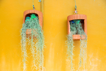 threadlike: Pot hanging with spanish moss, Spanish moss.