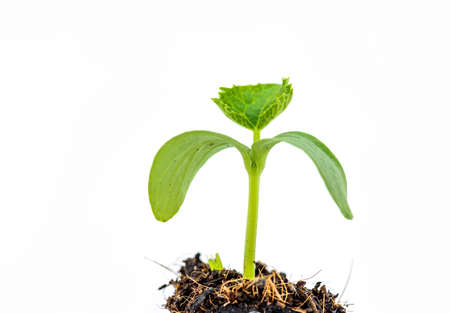 seed: Young plants growing from seed Stock Photo