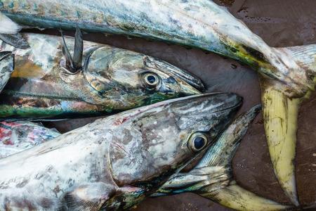 ration: Fresh Pacific king mackerels or Scomberomorus fish at Thailand market