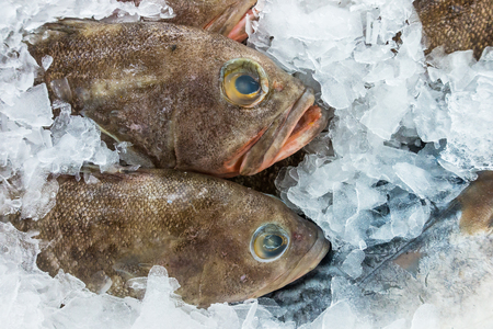 Variety of Raw Fresh Fish Chilling on Bed of Cold Ice in Seafood Market. Stock Photo