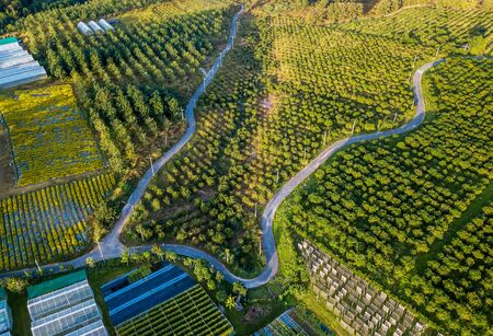 Bird eye view of agricultural plantation in located Chiang Mai district ,Thailand
