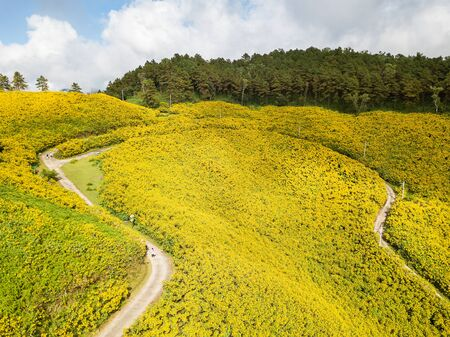 Landscape of beautiful Mexican sunflower in Tung Bua Tong  in Maehongson (Mae Hong Son) Province, Thailand. Stock Photo