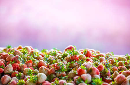 Strawberry with pink background Stock Photo