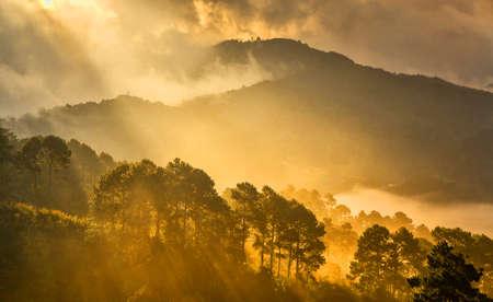 Golden light and misty on hill