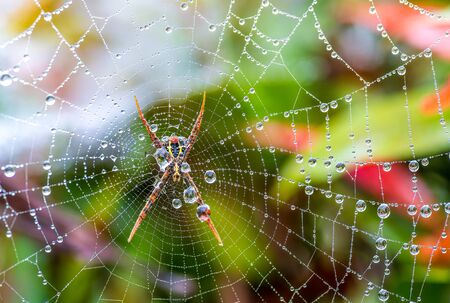 Spider web with some water droplets early in the morning after rain Stock Photo
