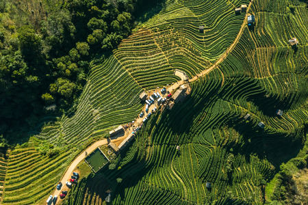 Tea Plantation on the mountain from aerial view in the Doi Ang Khang, Chiang Mai, Thailand. Stock Photo