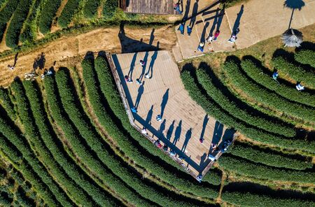 View on tourist at tea plantation 2000 on the mountain from aerial view in the Doi Ang Khang, Chiang Mai, Thailand. Background of people with long shadows. a crowd of people in top-view