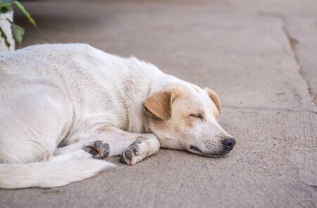 Homeless abandoned dog sleeping on the roadside Stock Photo