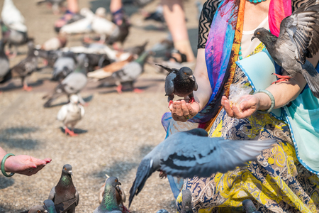 Pigeons eat food from a hand in the park