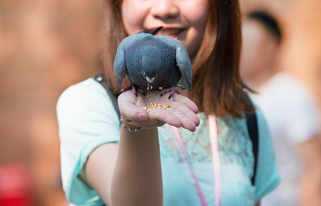 Pigeons eat food from a hand in the park Stock Photo - 100944321