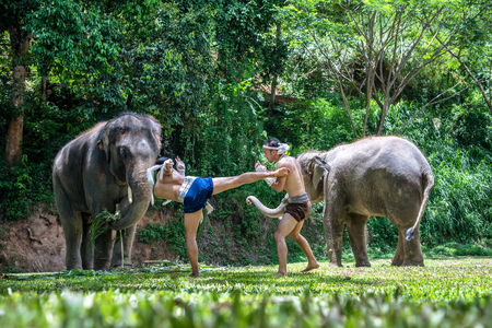 CHIANG MAI, THAILAND - JUNE 3, 2018 :  Boxing Fighting with elephants is the background, The activities at MAESA ELEPHANT CAMP in Chiang Mai, Thailand.  Activities that make everyone love and care for elephants.