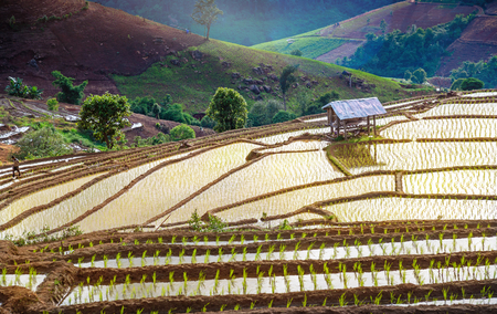 View Terraced Paddy Field in Mae-Jam Village , Chaing mai Province , Thailand. Stock Photo