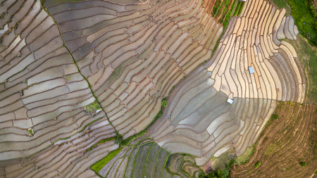 Aerial drone shot of top view Terraced Paddy Field in Mae-Jam Village , Chaing mai Province , Thailand. Top view Pa Pong Piang rice field.
