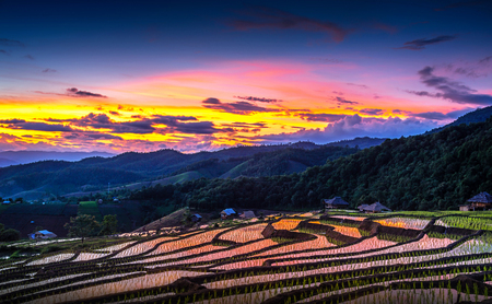 Beautiful sunset at Terraced Paddy Field in Mae-Jam Village , Chaing mai Province , Thailand. Pa Pong Piang rice field.
