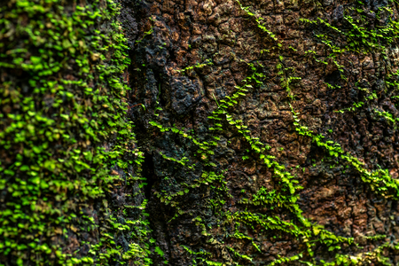 Close up of bright green moss on tree trunk. Nature life background in forest