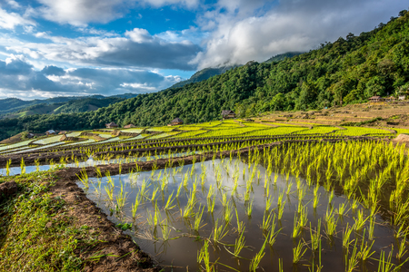 Terraced Paddy Field in Mae-Jam Village , Chaing mai Province , Thailand.