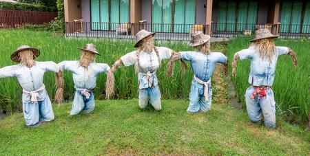 Scarecrow farmer in rice field