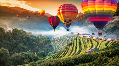 Colorful hot air balloons flying over Tea plantation 2000 s in the Doi Ang Khang, Chiang Mai, Thailand.