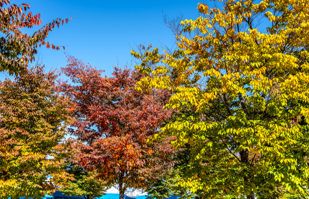 Autumn leaves on the sun, Nature background with blue sky