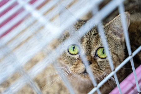 Closeup of one tabby kitten cat looking through a cage Stock Photo