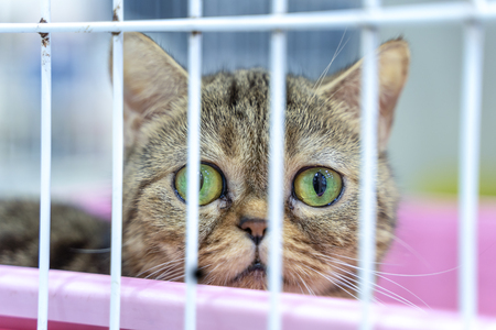Closeup of one tabby kitten cat looking through a cage 免版税图像