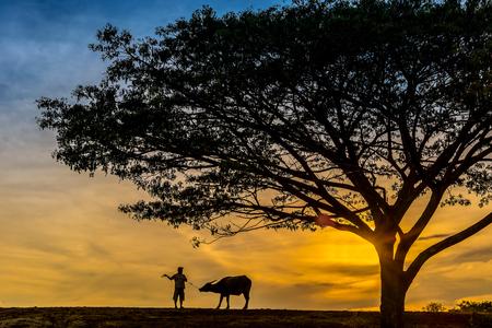 Silhouette farmer man is taking thai buffalo back home at sunset, Nakhon Si Thammarat, Thailand
