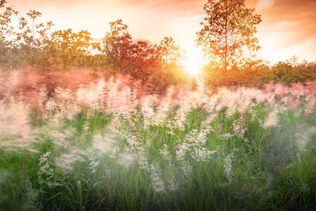 Grass flowers with strong wind in sunset sky