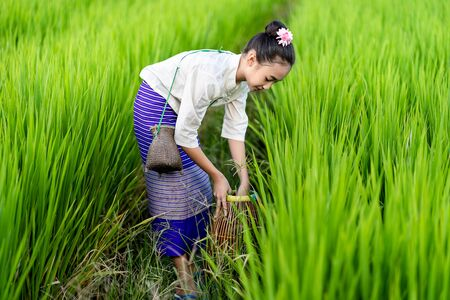 Asian girl with fishing equipment in rice field with rural background Imagens