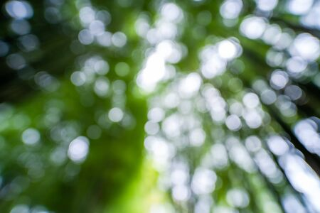 Blurred background of green bamboo in the forest
