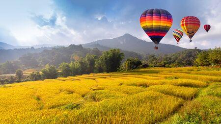 Globo de aire caliente sobre el campo de arroz en terrazas amarillas en temporada de cosecha Foto de archivo