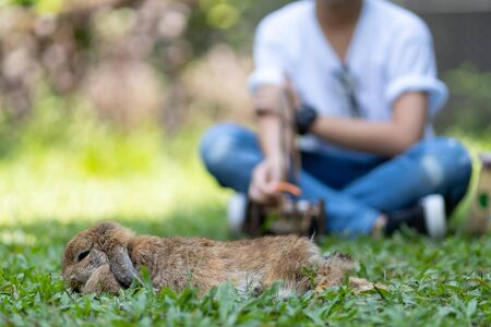 Little kid with bunny , feeding rabbits with carrot