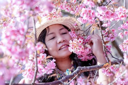 Asian woman in cherry blossom garden on a winter day, Chiang Mai, Thailand Stock fotó
