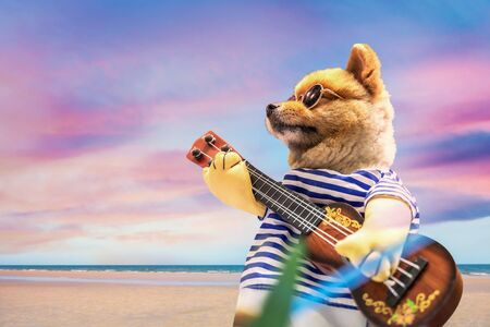 Smart Pomeranian dog wearing glasses with a guitar and beautiful sky background. Cute and Funny animals.  Stock fotó