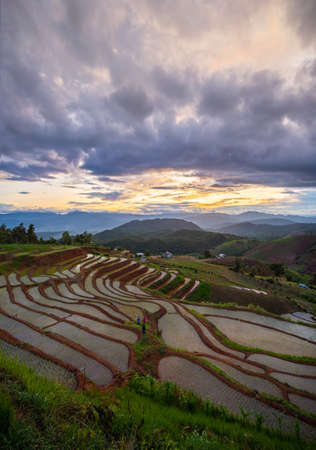 Beautiful scenery of Pa Pong Peang or Pa Bong Piang rice terrace in sunset, Chiang Mai in Thailand Imagens