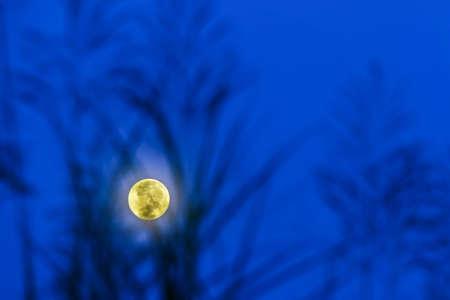 Corn Moon and blue sky Imagens
