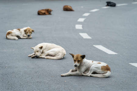 Abandoned homeless stray dog is lying in the street.  Lonely homeless stray dog is laying at footpath.