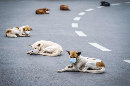 Distancing Respected social distancing between dogs. Corona virus mask on dog. Imagens