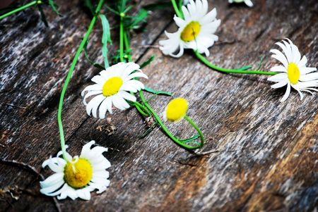Daisies resting on a wooden plank