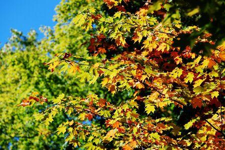 vallen kleuren op de boomtoppen Stockfoto
